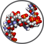 Icon 2, DNA, circle