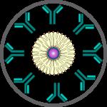 Icon 8, Antibody conj, circle